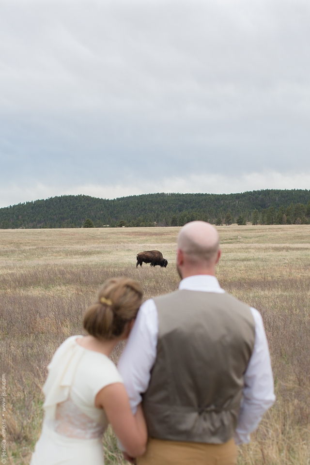 Buffalo at Custer State Park South Dakota